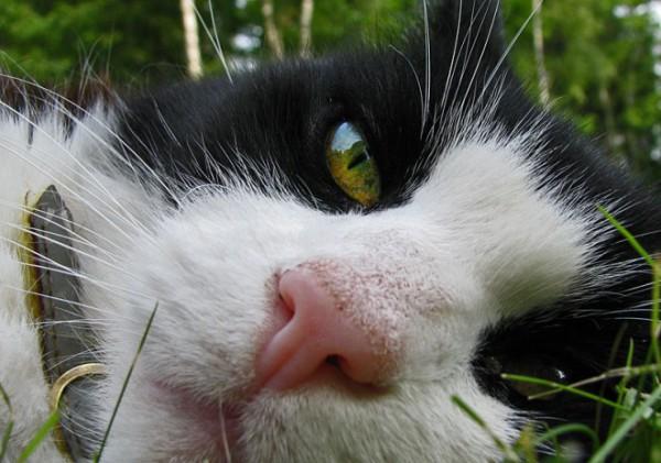 nikon-katt